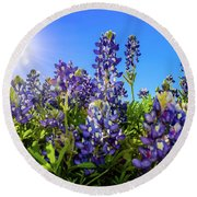 Texas Bluebonnets Backlit II Round Beach Towel