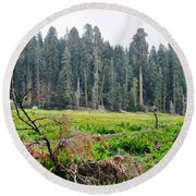 Round Beach Towel featuring the photograph Tharps Log Meadow by Kyle Hanson