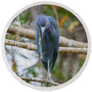 That Feels Great - Little Blue Heron Round Beach Towel