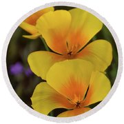 Round Beach Towel featuring the photograph That Golden Spring Glow  by Saija Lehtonen