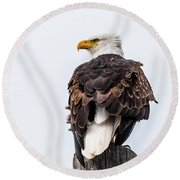 The Alert Round Beach Towel by Yeates Photography