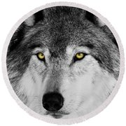 Round Beach Towel featuring the photograph The Alpha Portrait by Mircea Costina Photography