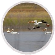 The American White Pelicans Round Beach Towel by Ernie Echols