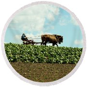 The Amish Farmer With Horses In Tobacco Field Round Beach Towel