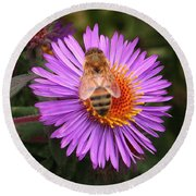 Round Beach Towel featuring the photograph The Aster And The Bee by Laurel Talabere