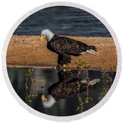 The Bald Eagle Round Beach Towel by Mitch Shindelbower
