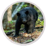 The Bear Round Beach Towel by Everet Regal