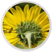 The Bee Lady Bug And Sunflower Round Beach Towel