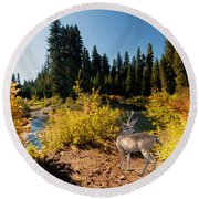 Round Beach Towel featuring the photograph The Bend Of The Rogue River by Diane Schuster