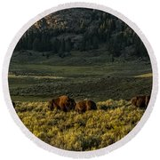 The Bison Rut In Yellowstone Round Beach Towel by Yeates Photography