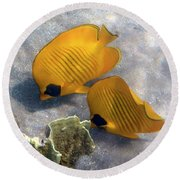 The Bluecheeked Butterflyfish Round Beach Towel