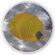 The Bluecheeked Butterflyfish Red Sea Round Beach Towel