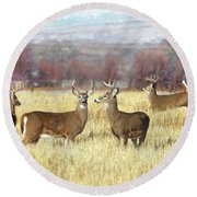 Round Beach Towel featuring the photograph The Bucks Stop Here White-tail Deer  by Jennie Marie Schell