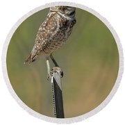 The Burrowing Owl Round Beach Towel