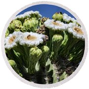 Round Beach Towel featuring the photograph The Busy Little Bees On The Saguaro Blossoms  by Saija Lehtonen