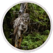 The Captivating Great Grey Owl Round Beach Towel by Yeates Photography