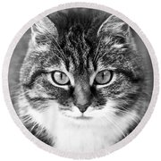 The Cat Stare Down Round Beach Towel