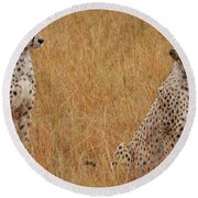 The Cheetahs Round Beach Towel by Nichola Denny