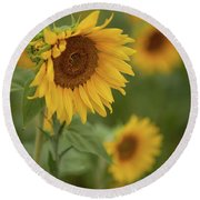 The Close Up Of Sunflowers Round Beach Towel