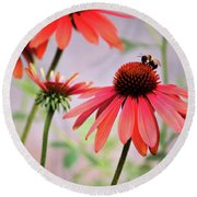The Coneflower Collection Round Beach Towel