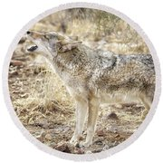 The Coyote Howl Round Beach Towel