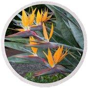 The Crane Flower - Bird Of Paradise  Round Beach Towel