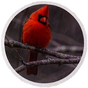 The Curious Cardinal  Round Beach Towel