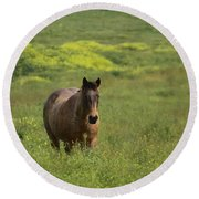 The Curious Working Horse Round Beach Towel