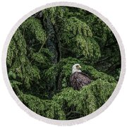 Round Beach Towel featuring the photograph The Dark Eyed One by Timothy Latta
