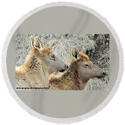 The Elk Of Winter  Round Beach Towel