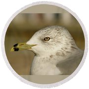 The Eye Of The Seagull Round Beach Towel