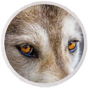 Round Beach Towel featuring the photograph The Eyes Of A Great Grey Wolf by Teri Virbickis