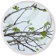 The Fig Tree Budding Round Beach Towel