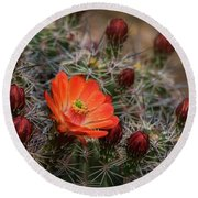 Round Beach Towel featuring the photograph The First Bloom  by Saija Lehtonen