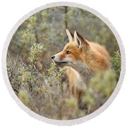 The Fox And Its Prey Round Beach Towel