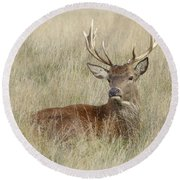The Gentle Stag Round Beach Towel