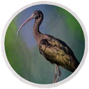 The Glossy Ibis Stroll Round Beach Towel