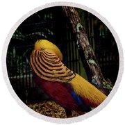 The Golden Pheasant Or Chinese Pheasant -atlanta Ga, Zoo Round Beach Towel
