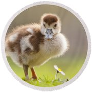 The Gosling And The Flower Round Beach Towel
