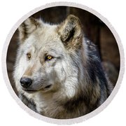 Round Beach Towel featuring the photograph The Gray Wolf by Teri Virbickis