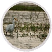 The Great Egret  Ardea Alba Syn  Casmerodius Albus  Round Beach Towel