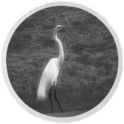 The Great Egret Round Beach Towel