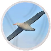 The Greatest Seabird Round Beach Towel by Tony Beck