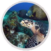 The Green Turtle And The Angelfish Round Beach Towel