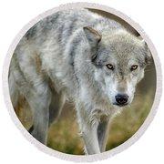 The Grey Wolf Shake Round Beach Towel