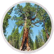 The Grizzly Giant- Round Beach Towel