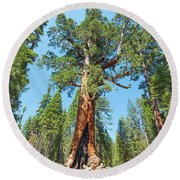 Round Beach Towel featuring the photograph The Grizzly Giant- by JD Mims