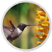 Round Beach Towel featuring the photograph The Hummingbird And The Bee by William Lee