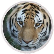 Round Beach Towel featuring the photograph The Hunter by Laddie Halupa