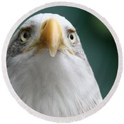 Round Beach Towel featuring the photograph The Hunters Stare by Laddie Halupa